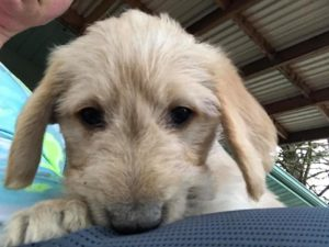 What-you-need-to-know-with-your-new-puppy